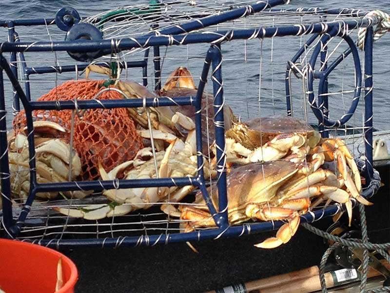 Pro fish guide products pro fish guide for Crab fishing oregon